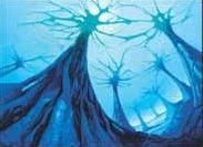 Mycosynth Lattice